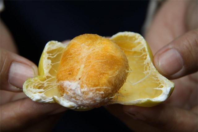 Những loại quả kỳ lạ, đặc sản của núi rừng Việt Nam