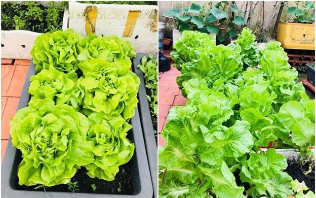 Bố đảm mê rau sạch biến sân thượng 20m² thành vườn xanh mướt