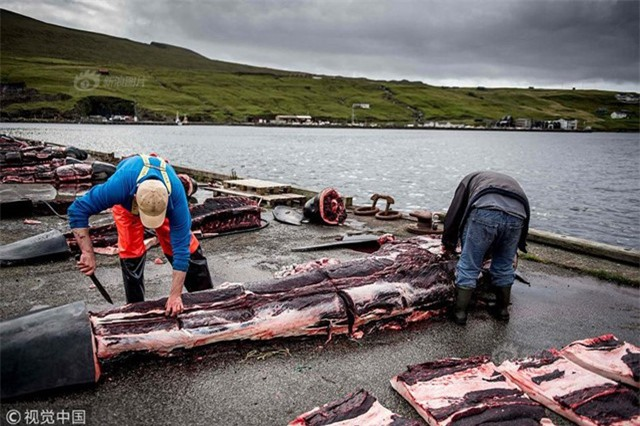 Rợn người cảnh lột da, lóc thịt hàng trăm con cá voi