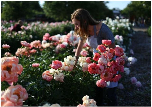 Cuộc sống đáng mơ ước của cô gái từ bỏ công việc văn phòng để chăm sóc cánh đồng hoa đẹp như cổ tích