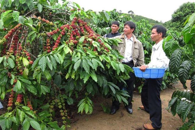 BẢN TIN TÀI CHÍNH-KINH DOANH: Xăng dầu bước vào kỳ tăng mạnh, cà phê rớt giá kỷ lục