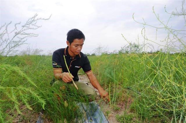 Tiến sĩ về quê làm giàu bằng nghề tay trái-trồng rau trên cát