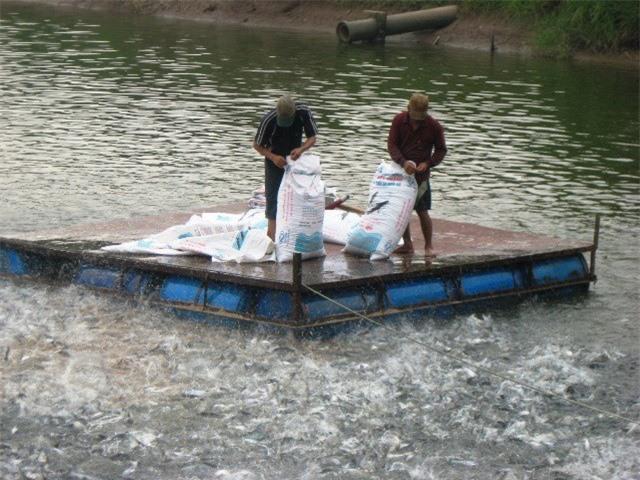 Tôm, cá Việt 4 ngày có 3 tin vui tại thị trường Mỹ
