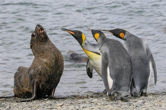 Những bức ảnh siêu hài hước về thế giới động vật