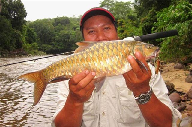 """Đại gia săn lùng đặc sản cá """"vong bất liễu ngư"""" quý như vàng"""