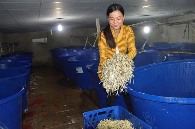 Sản xuất giá sạch thu tiền triệu mỗi ngày
