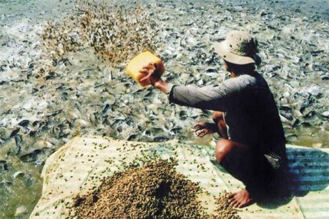Phạt 200 triệu đồng về hành vi sử dụng chất cấm trong chăn nuôi
