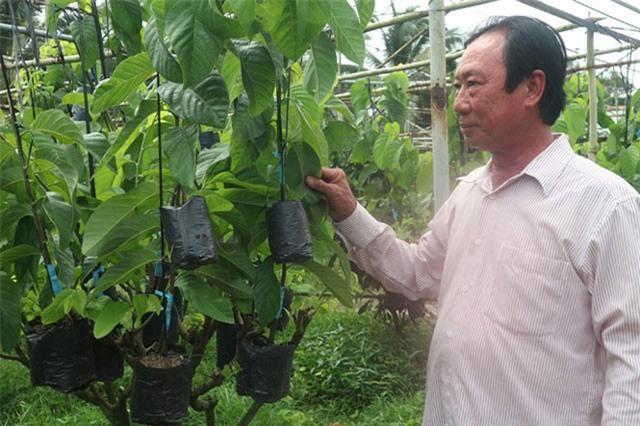 Lão nông ở Vĩnh Long kiếm lời tiền tỉ từ cây giống