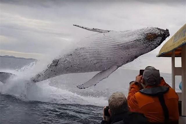 Clip: Hãi hùng trước cảnh đối mặt với cá voi khổng lồ như trong phim kinh dị