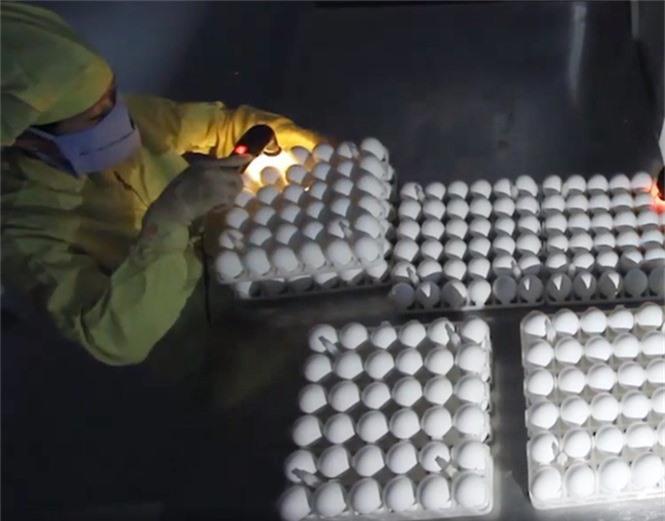 Việt Nam sản xuất thành công vắc xin cúm mùa và cúm A/H5N1  - ảnh 2