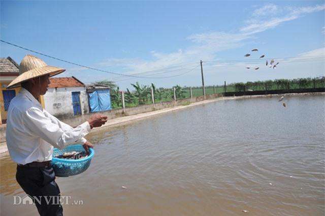 Lão nông Ninh Bình kiếm tiền tỷ nhờ con cá lóc bông