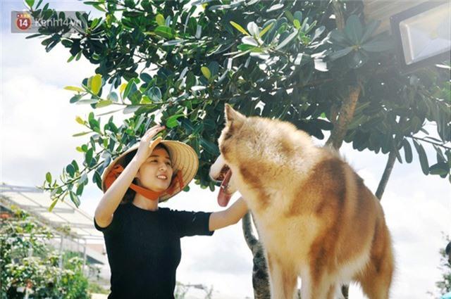 Rời bỏ phố thị, cô gái Sài Gòn lên Đà Lạt cùng bạn trai xây dựng khu vườn giữa núi rừng hoang vu dành cho thú cưng - Ảnh 6.