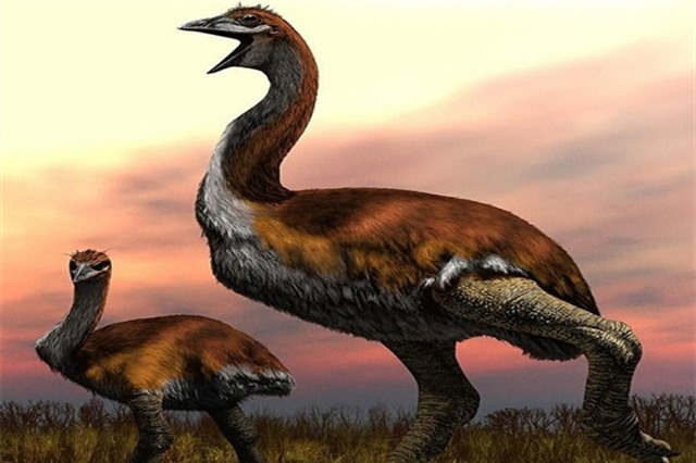 Phát hiện loài chim khổng lồ lớn nhất Trái Đất