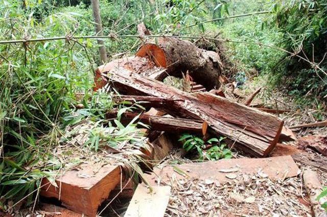 Bắt giam, đình chỉ nhiều cán bộ kiểm lâm vì để xảy ra phá rừng quy mô lớn