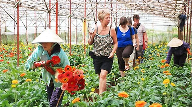 Gắn du lịch với nông nghiệp xanh: Hướng đi mới triển vọng