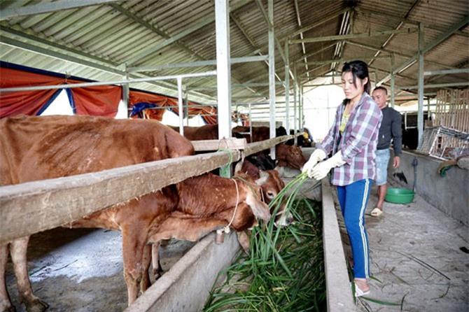 Chăn nuôi sẽ gặp khó khăn nếu không áp dụng công nghệ 4.0.