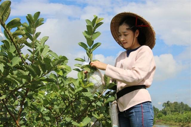 Hot girl 9X Đồng Tháp về quê trồng ổi Mỹ, mỗi năm bán 90 tấn trái
