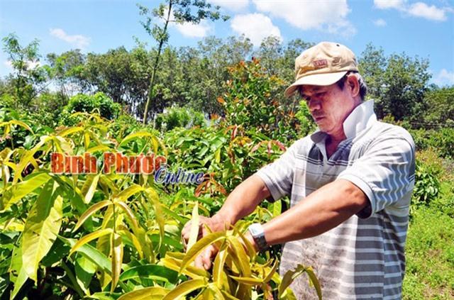 Bình Phước: Rau rừng thơm, ngon, bổ, rẻ mà bán trầy trật, ế ẩm