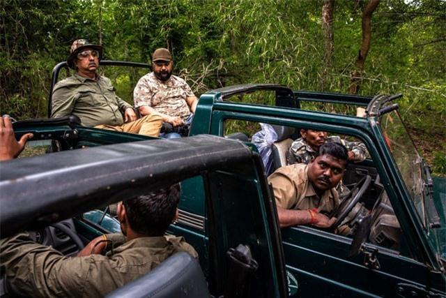 Chiến dịch dùng nước hoa vây bắt con hổ ăn thịt 13 người ở Ấn Độ