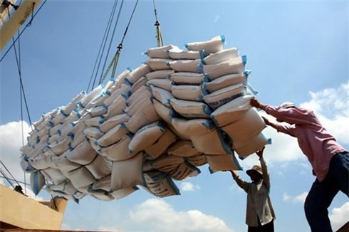 Gạo Việt Nam bước đầu thâm nhập được các thị trường yêu cầu chất lượng cao. (Ảnh: VOV)