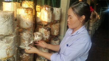Nam Định: Mỗi năm kiếm hơn nửa tỷ nhờ trồng nấm sạch