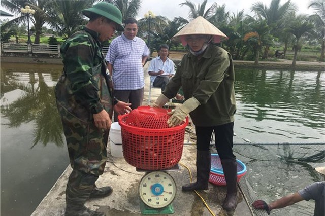 """U70 có """"biệt tài"""" ươm cá giống, bán cả sang Lào, thu tiền tỷ/năm"""