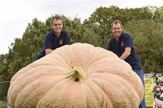 Bí ngô to khủng khiếp, nặng hơn nghìn kg đón Halloween