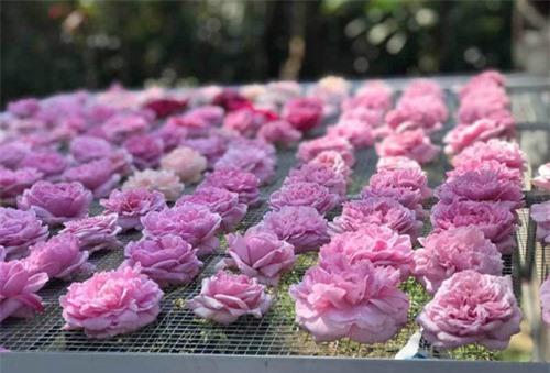 Trà hoa hồng nguyên bông 10 triệu/kg, ông chủ cũng không dám uống nhiều
