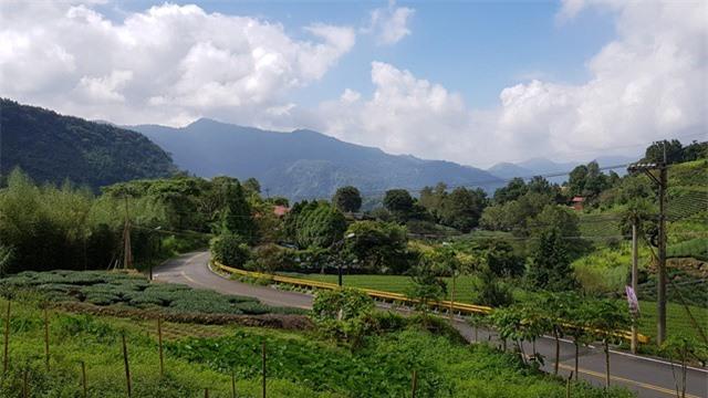 Vùng núi A Lý là nơi thích hợp cho cây cà phê phát triển.