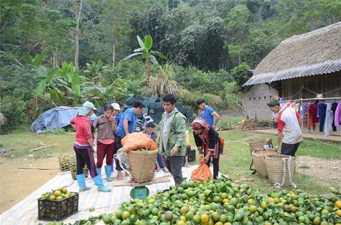Khu vườn trồng cam Hàm Yên đã mang đến cho xã Phù Lưu những làng triệu phú. Ảnh: Nongnghiep.