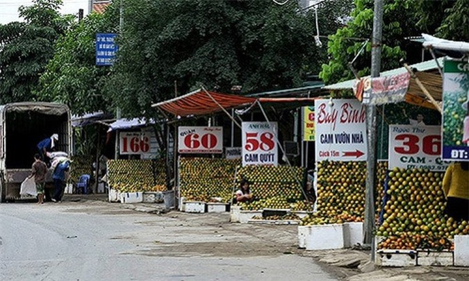 Khẳng định được thương hiệu cam Cao Phong (Hòa Bình), vùng đất này được coi là thị trấn có nhiều tỷ phú nhất đất Tây Bắc. Ảnh: Dân Việt.