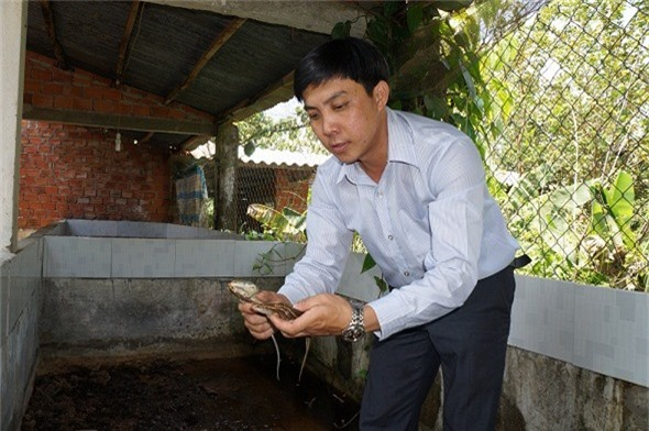 quang nam: nuoi nhung con ky la, moi nam lai rong 2 ty dong hinh anh 3