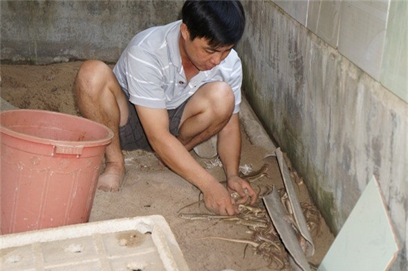 quang nam: nuoi nhung con ky la, moi nam lai rong 2 ty dong hinh anh 5
