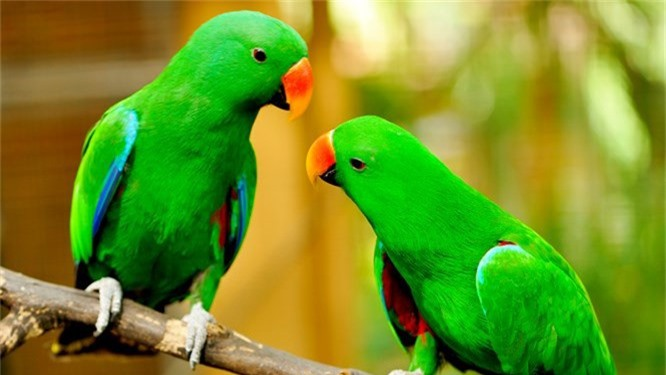 Bạn có biết 10 loài động vật nào thông minh nhất trên hành tinh? - ảnh 2