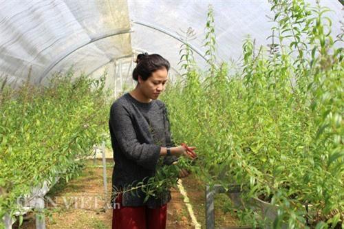 Trồng cây lạ thu nhập 50 triệu/tháng của hot girl Đà Lạt