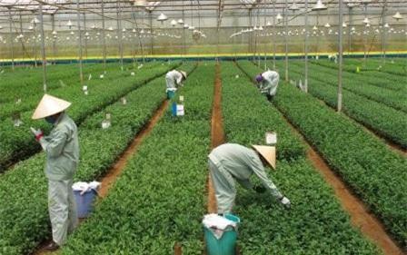 Lâm Đồng: Nhiều chính sách hỗ trợ doanh nghiệp đầu tư vào nông nghiệp