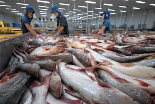 BẢN TIN TÀI CHÍNH - KINH DOANH: Xuất khẩu cá tra đạt giá trị kỷ lục, giá rau xanh tăng mạnh sau mưa lũ