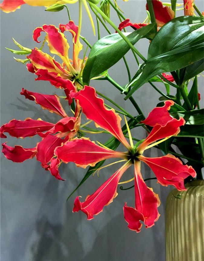Loài hoa đỏ rực lửa từ Nhật đốt túi tiền khách dịp Tết-1
