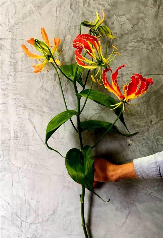 Loài hoa đỏ rực lửa từ Nhật đốt túi tiền khách dịp Tết-3