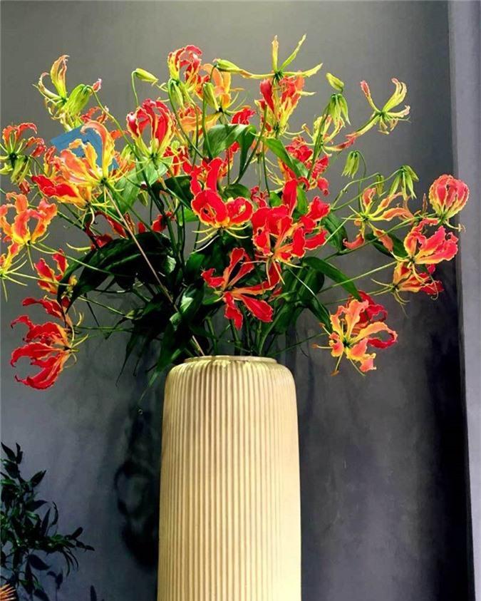 Loài hoa đỏ rực lửa từ Nhật đốt túi tiền khách dịp Tết-4