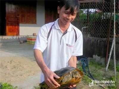 Nuôi lổm ngổm loài rùa to lụ khụ ở bể xi măng, bán 700 ngàn/con