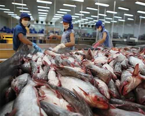 Việt Nam có thể tăng thị phần xuất khẩu cá tra vào Mỹ, nhờ hưởng lợi từ căng thẳng Mỹ - Trung.