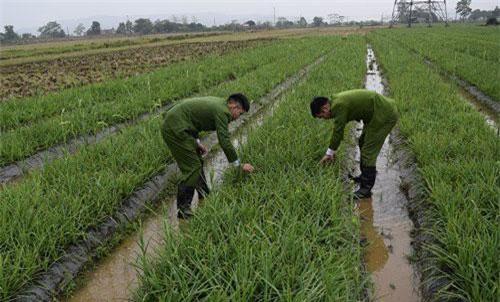 Quảng Ninh: Thiếu tiền mua ma túy, cắt trộm 6.000 bông hoa huệ đem bán