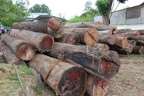 """Đắk Nông: Trạm trưởng bảo vệ rừng nhận tiền hối lộđể trùm gỗ lậu """"lọt"""" trạm"""