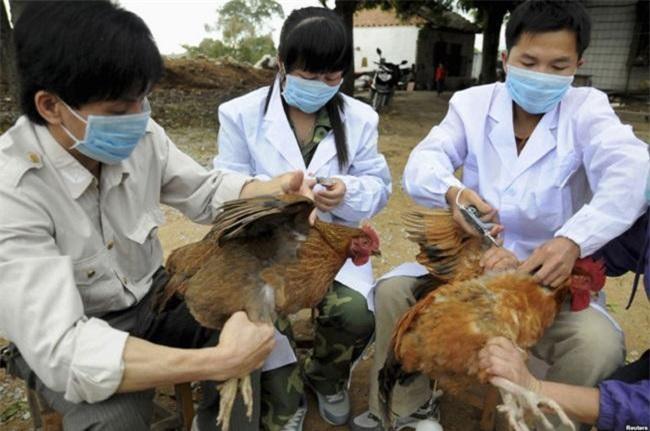 "Kon Tum: Dịch bệnh trên gia súc, gia cầm ""nóng"" dịp tết"