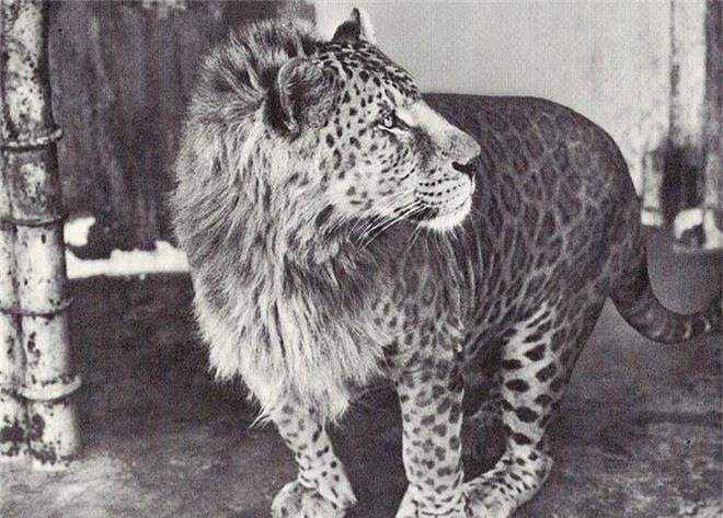"""Những """"hoàng tử lai"""" đẹp đến ngỡ ngàng trong thế giới động vật - Ảnh 16."""