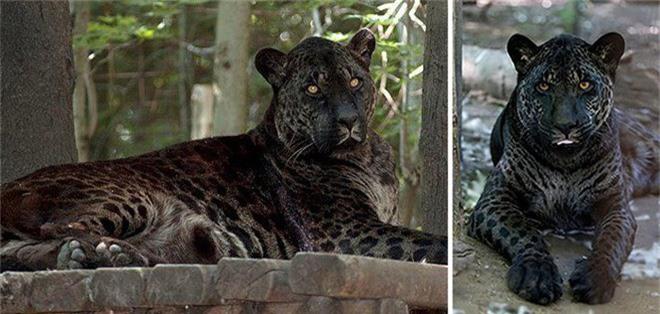 """Những """"hoàng tử lai"""" đẹp đến ngỡ ngàng trong thế giới động vật - Ảnh 4."""