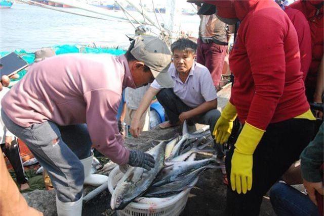 Trúng mẻ cá khủng 100 tấn ngày đầu năm, thu về gần 6 tỷ đồng - 2