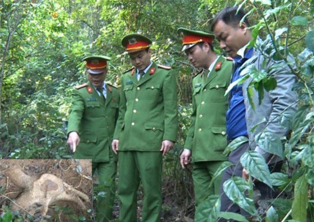 Thanh Hóa: Nhiều cán bộ, chiến sĩ nguy cơ phơi nhiễm HIV khi bắt kẻ trộm cây sưa