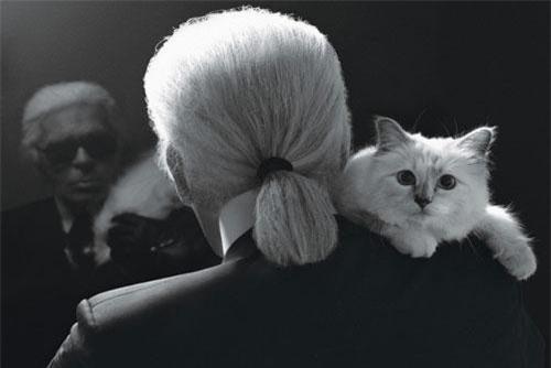 Con mèo của Karl Lagerfeld có thể sẽ được thừa kế 150 triệu bảng Anh